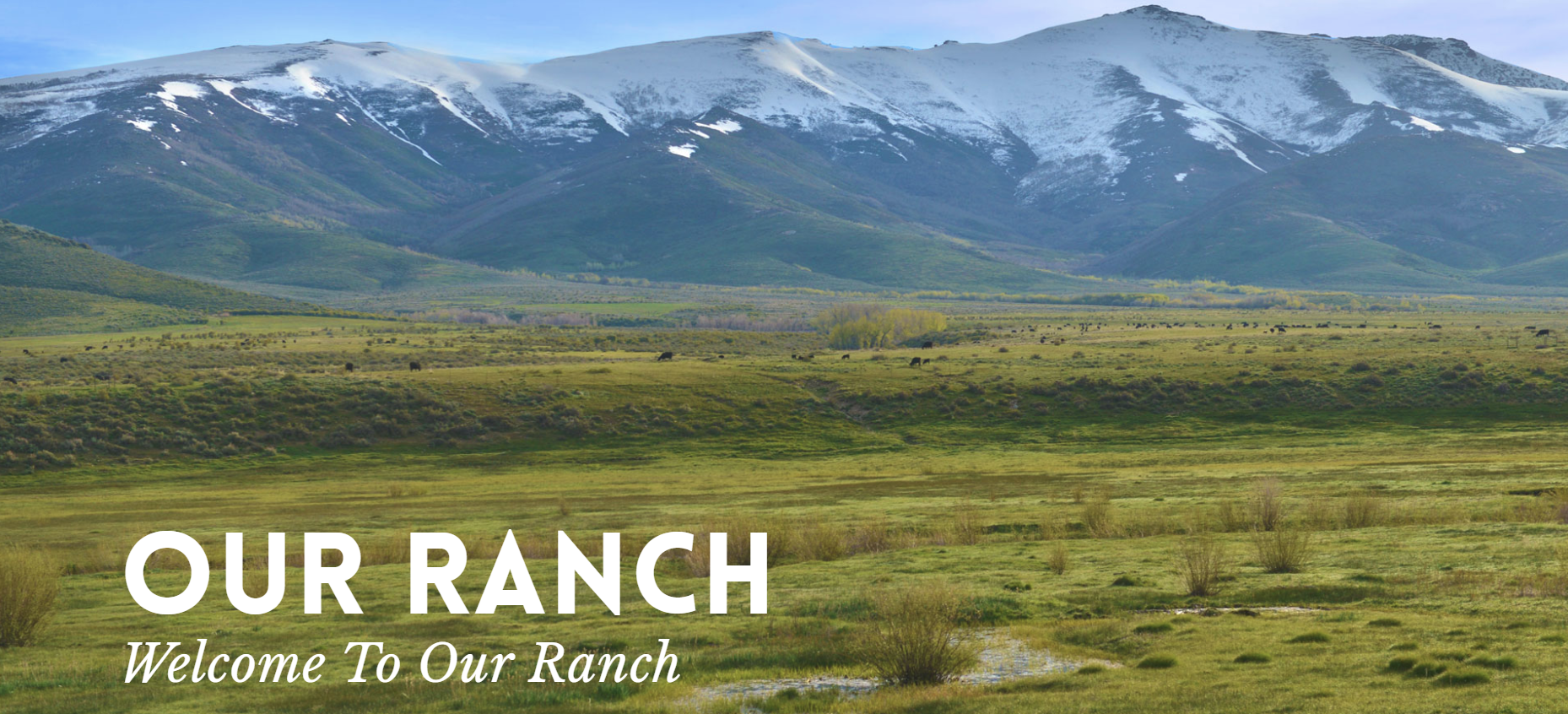 Our Ranch